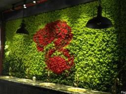 Вертикальное озеленение. Скандинавский мох