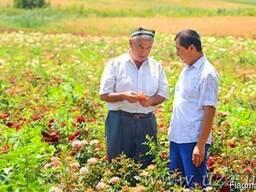 Вся сельхоз продукция Узбекистана
