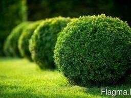 Высадка уличных деревьев, газонов, кустарников