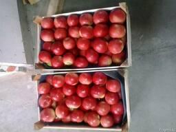 Яблоки - photo 3