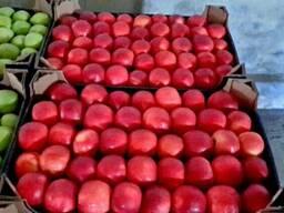 Яблоки и груша на Тараз - фото 4