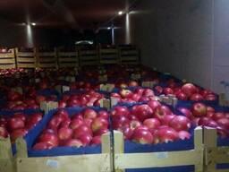 Яблоки и груша на Тараз - фото 5