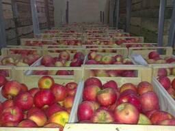 Яблоки оптом от производителя от 250 тенге/кг.