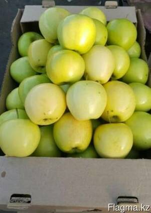 Яблоки сорта Golden Delicious ( Золотой превосходный)