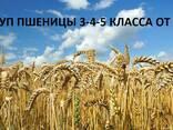 Закупаем пшеница 3-4-5 класса - фото 1