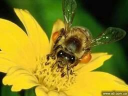 Закупаем мёд