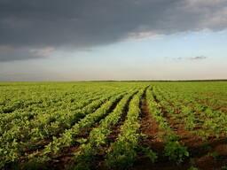 Продается участок земли в Актюбинской области