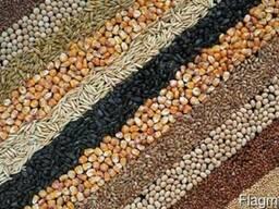 Зерно, семена, ячмень, соя, пшеница 3,4 класс