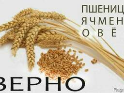 ЗерноСмесь