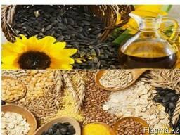 Зерно, зернобобовые и масленичные культуры на экспорт