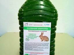 Живая хлорелла для кроликов