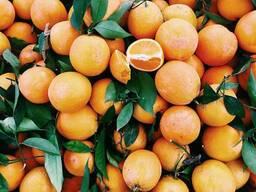 """""""Золотая осень"""" Апельсин термостабильные начинка 240°C"""