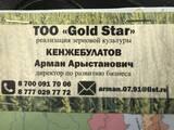 Gold star, ТОО